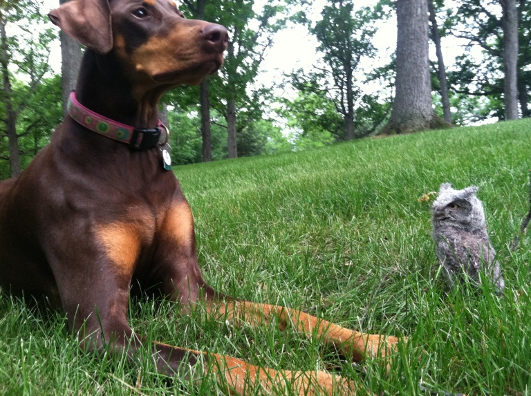 One of my favorite photos of Brontë, hanging with a hoot owl.
